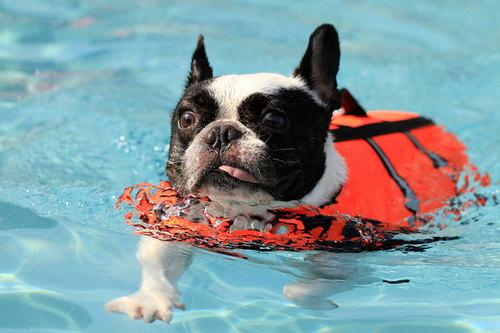 泳げなくても大丈夫!体験ダイビングは水の中を散歩するアクティビティ│宮古島体験ダイビング徹底比較